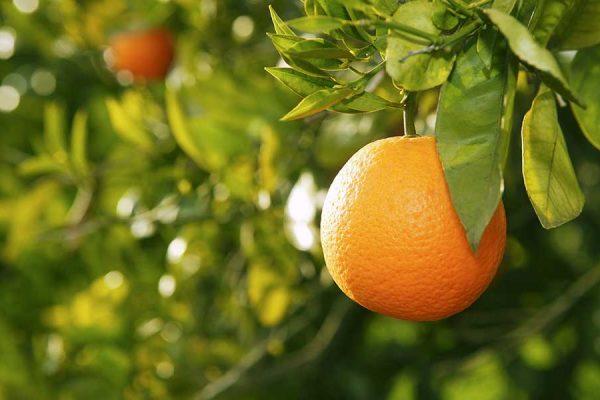 сон про апельсин