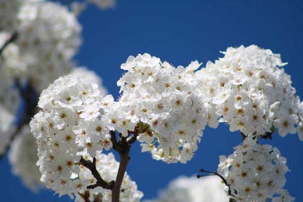 сон про цветы