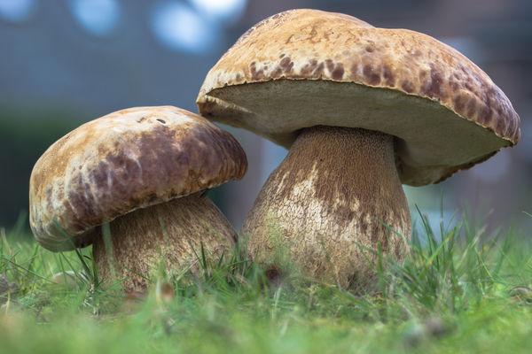 сон про гриб