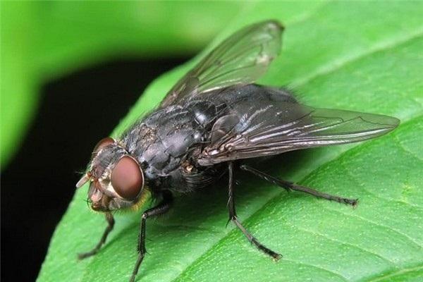 сон про муху