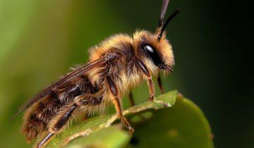 сон про насекомое