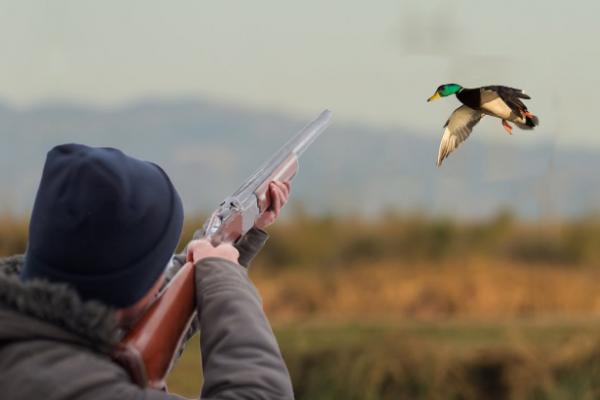 сон про охоту