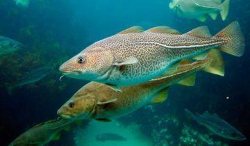 сон про рыбу