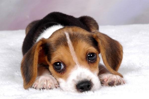сон про щенка