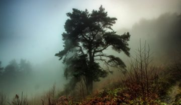 сон про туман
