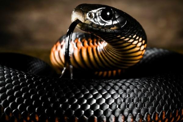 сон про змею