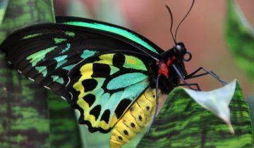 сон про бабочку