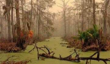 сон про болото