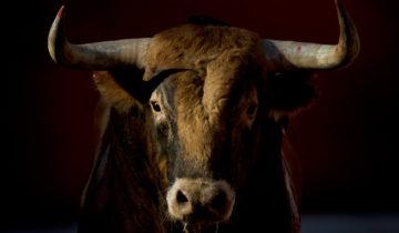 сон про быка
