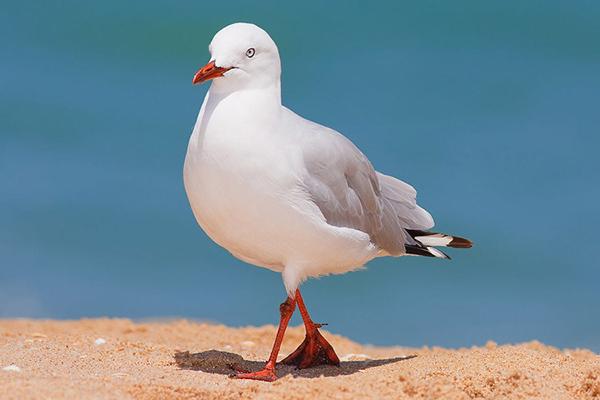 сон про чайку