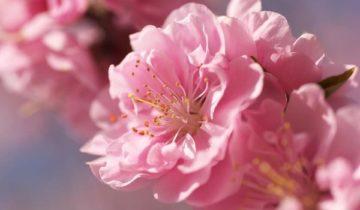 сон про цветение