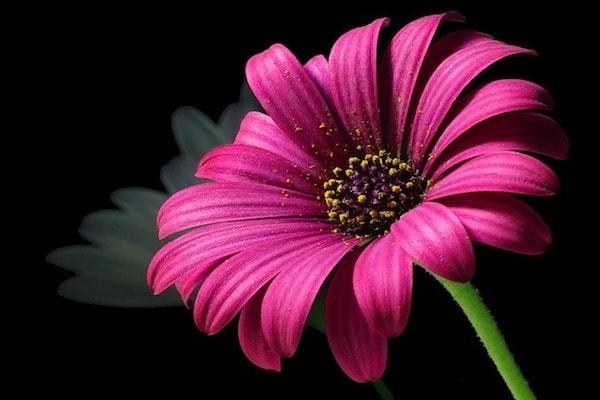 сон про цветок