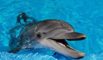 сон про дельфина