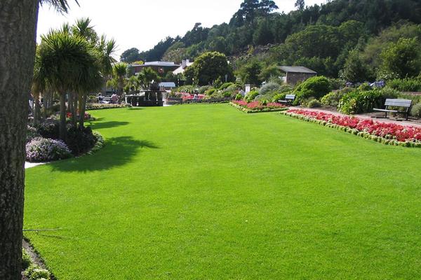 сон про газон