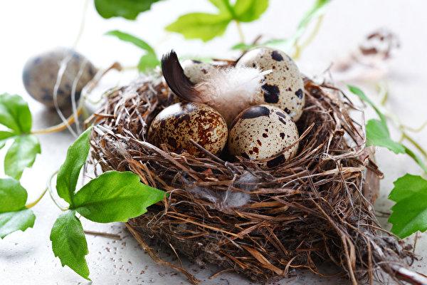сон про гнездо