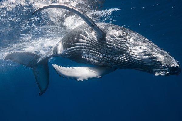 сон про кита