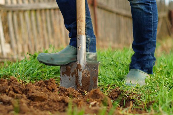 сон про копать