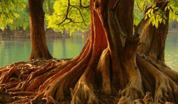 сон про корни