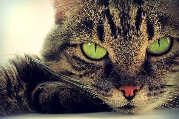 сон про кошку