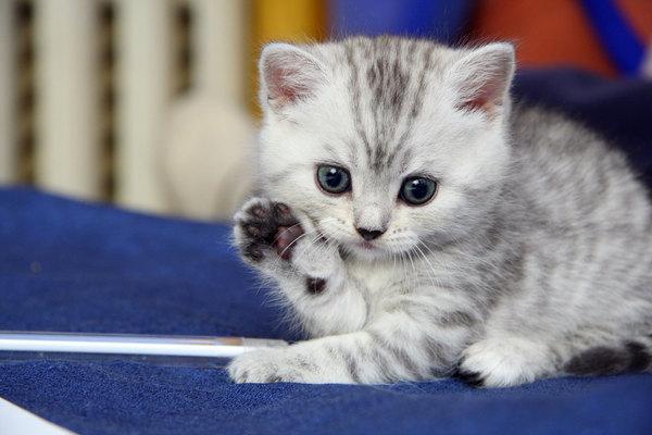 сон про котенка