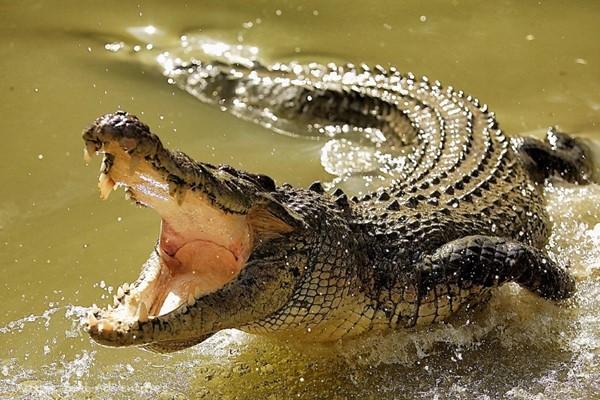 сон про крокодила
