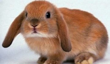 сон про кролика