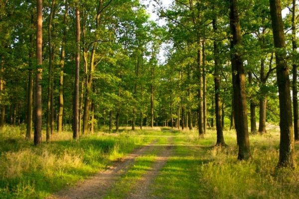 сон про лес
