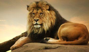 сон про льва