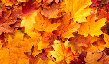 сон про листья