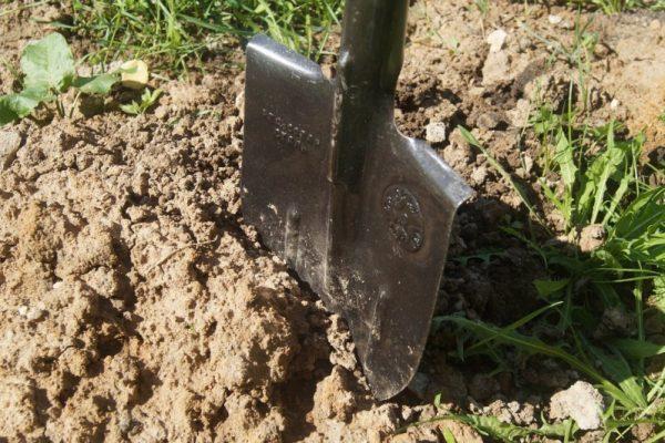 сон про лопату