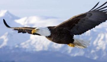 сон про орла