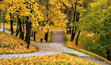 сон про осень