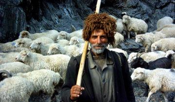 сон про пастуха