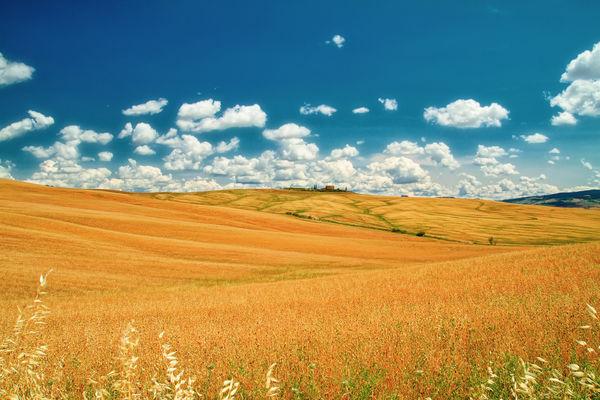 сон про поле