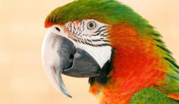 сон про попугая