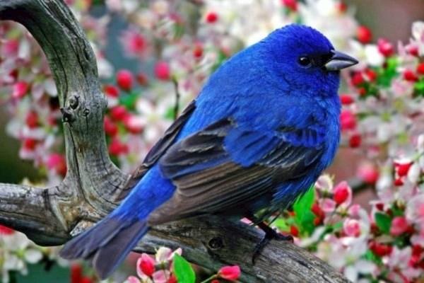 сон про птицу