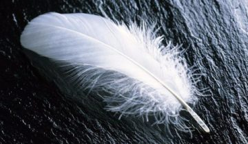 сон про птичье перо