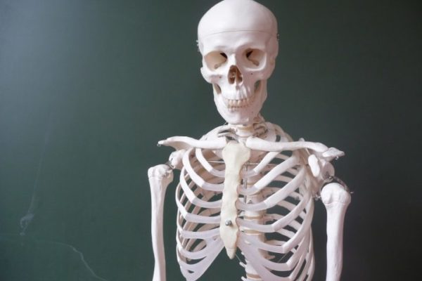 сон про скелета