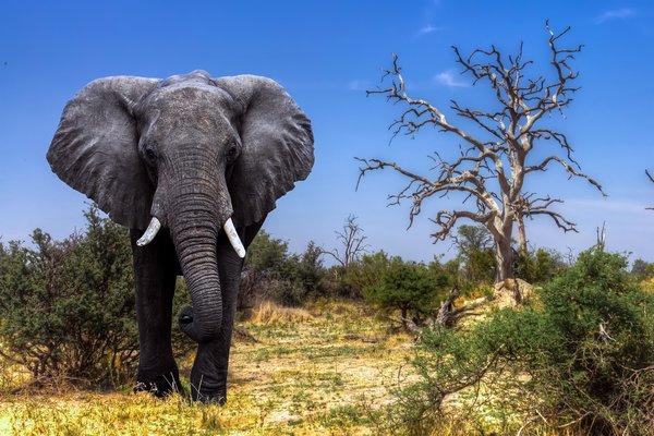 сон про слона