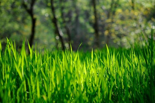сон про траву