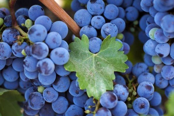 сон про виноград