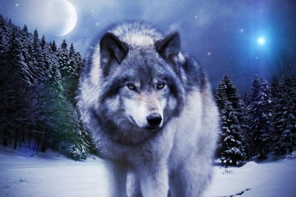 сон про волка