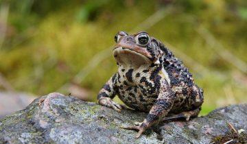 сон про жабу